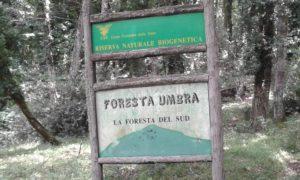 foresta 3